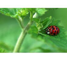 Ladybug Hideaway Photographic Print