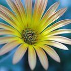 Spring Daisy by autumnleaf