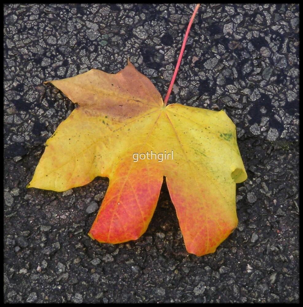 coloured leaf by gothgirl