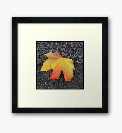 coloured leaf Framed Print