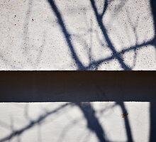 Concrete Jungle by David Librach - DL Photography -