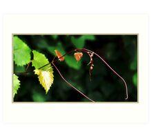 wild grapevine Art Print