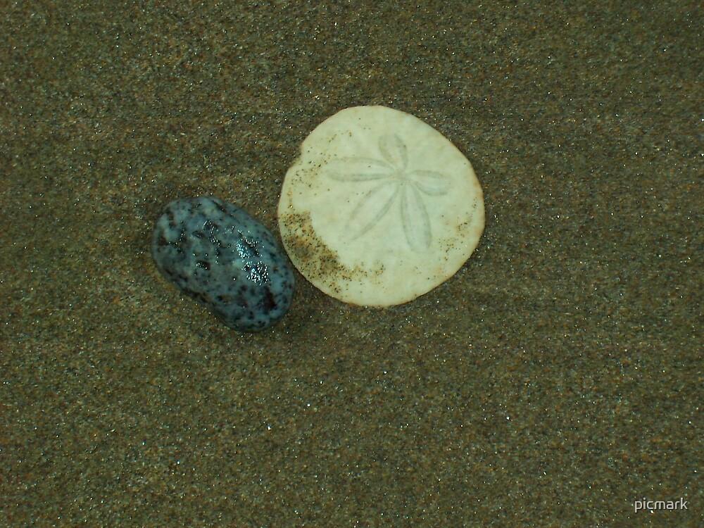 Sand Dollar by picmark