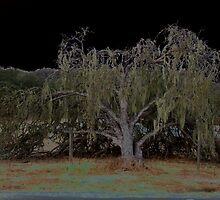 fallen oak by jason tipton