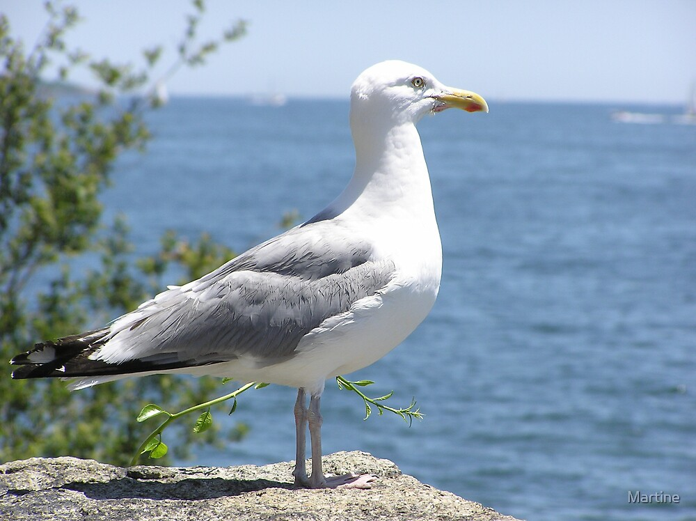 Sea Gull by Martine