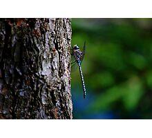 Dragon Tree Photographic Print