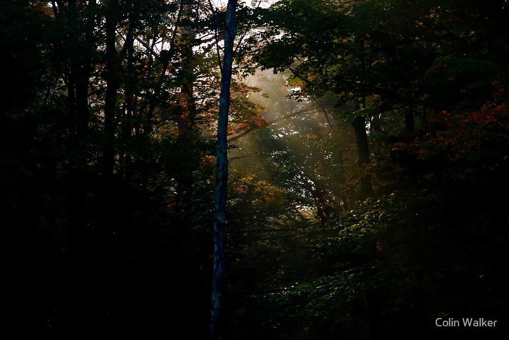 Misty Morning Sun by Colin Walker