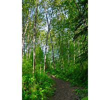 Country path  Photographic Print