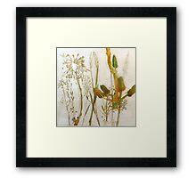 Mornington Peninsula Grasslands 9 Framed Print