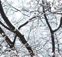 Birdie in a Tree (Central Park) Sticker