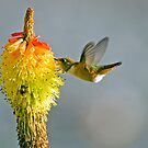 Birds and Bees by DawsonImages