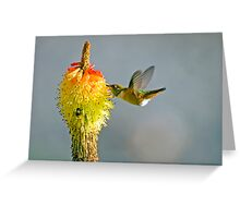 Birds and Bees Greeting Card