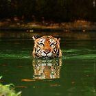 Sumatran Tiger by gromol