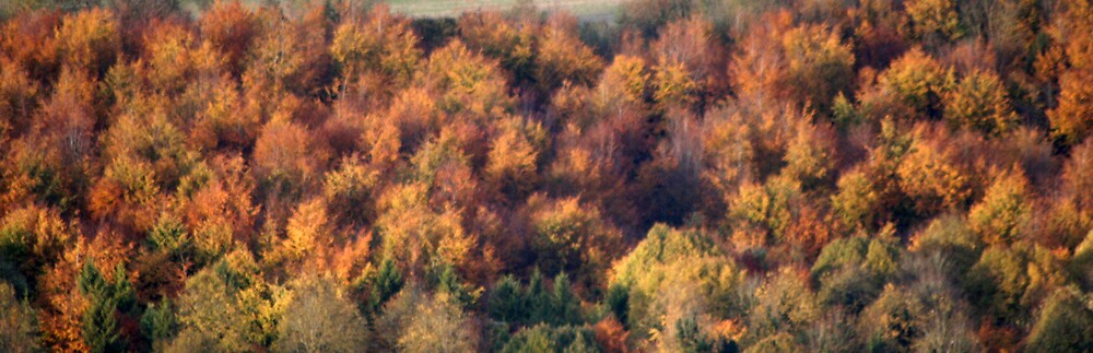 Autumn Trees by Hayley Evans