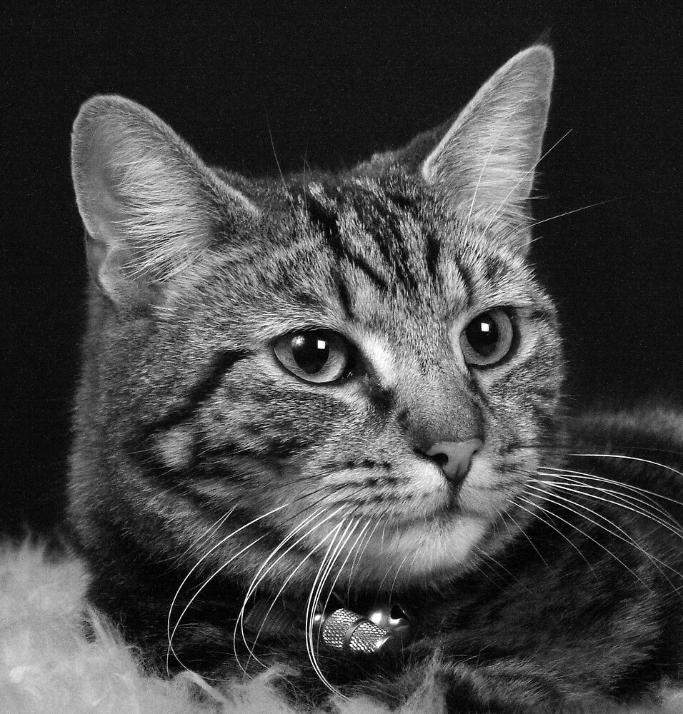 Cat Head by Hayley Evans