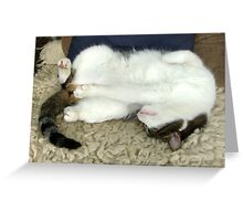 Taking a nap Greeting Card