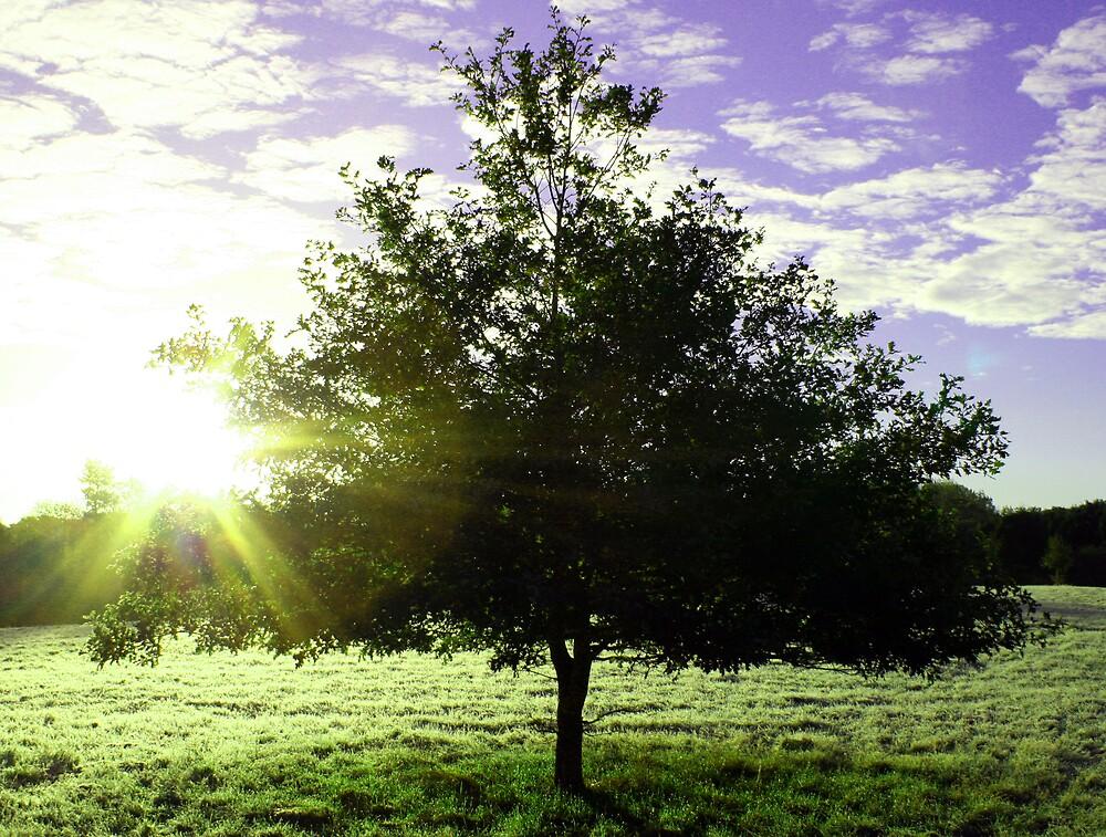 Tree in Field by Hayley Evans