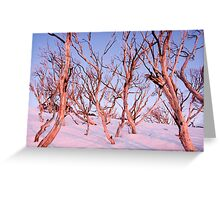 Pink Snow Gums Greeting Card