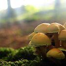 funghi by ladytwiglet