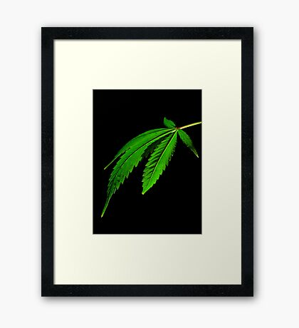 cannabis leaf Framed Print