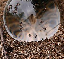 Ants Energy by bettyhores