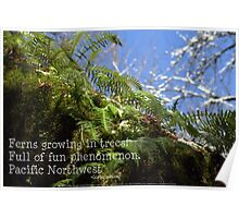 snowy Oregon ferns in trees with haiku Poster