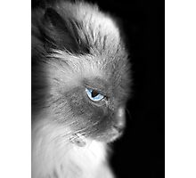 Moody Blues Photographic Print