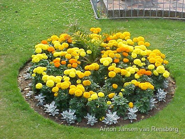garden by Anton Jansen van Rensburg
