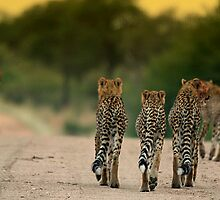 Hunting Brothers by Marie Strydom
