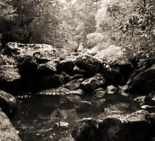 Bombaderry Creek by Timothy Atkinson