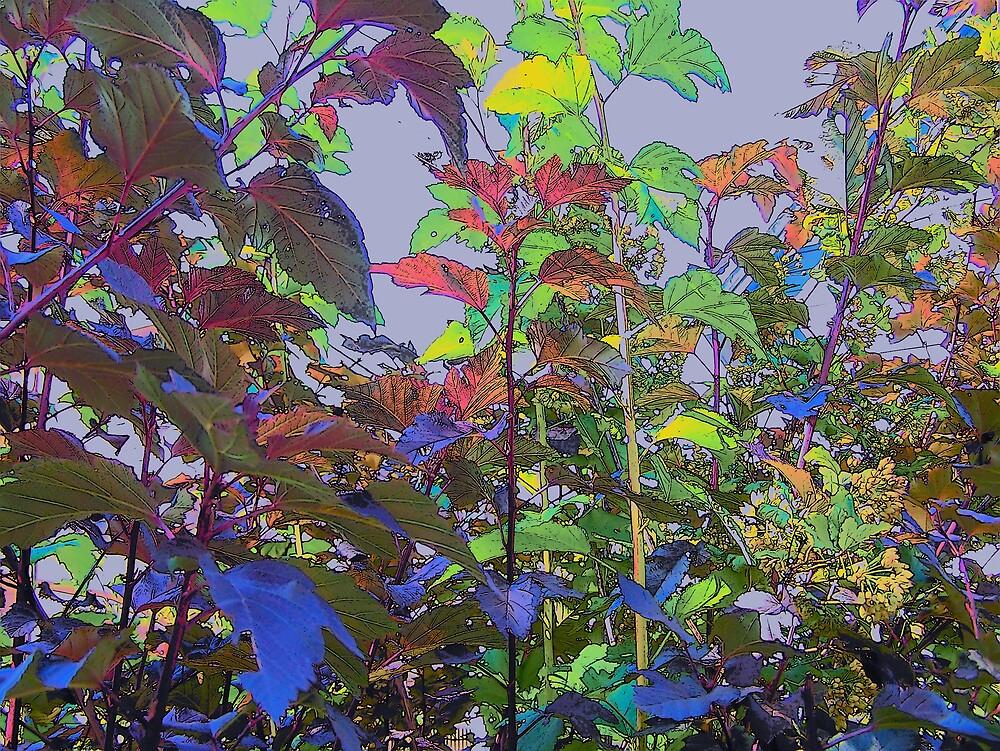 Fall Leaves by Gene Cyr