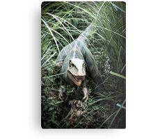 Ambush Predator  Metal Print