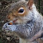 nuts make me smile by gruntpig