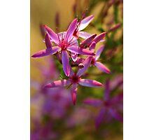 Kimberley Wildflower Photographic Print
