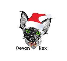 Devon Rex Christmas kitten Titled by devonzone