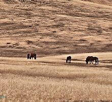 east range , Winnemucca area , wintery time coming by DonActon