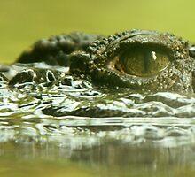 Crocodile by Erin McMahon