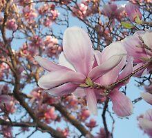 magnolia by Bente Hasler