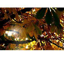 Sun Rays Photographic Print