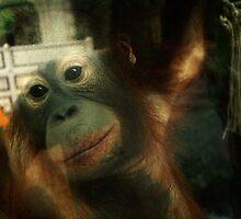 Orangutan by Erin McMahon
