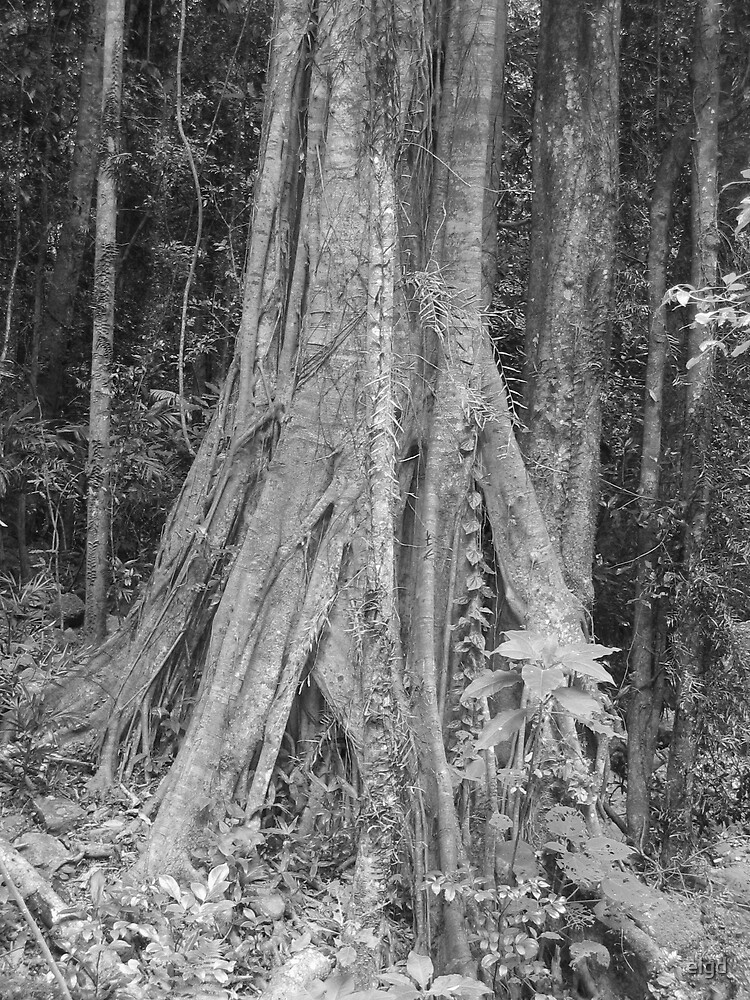 Rainforest Black & White by elgd