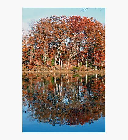 Autumn Narcissus Photographic Print