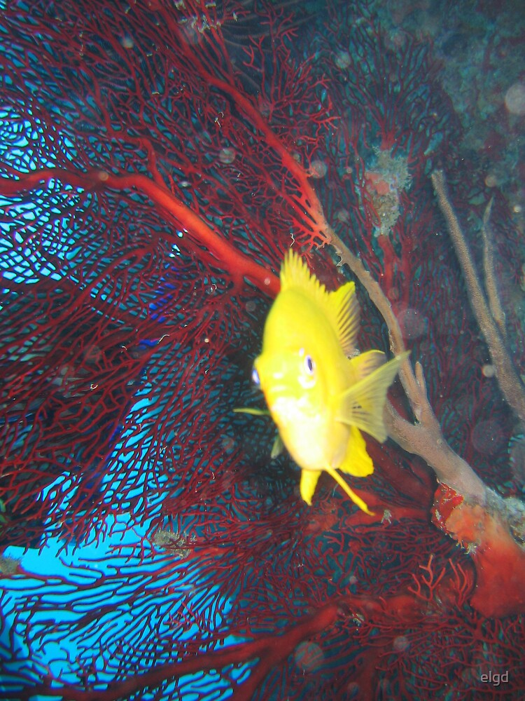 Yellow Fish by elgd