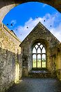 County Galway - Birds over Monastic Ruins by Mark Tisdale