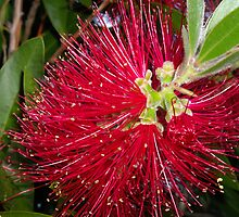 Bottle Brush by Sandra Chung