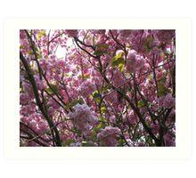 The Blossom Art Print