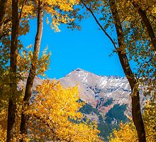 Fall colour on the last dollar highway by Randy Giesbrecht
