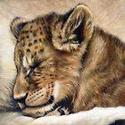 Lion cub on mum's tum by Tom Godfrey