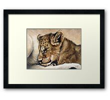 Lion cub on mum's tum Framed Print