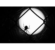 The Widow Photographic Print